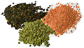 Lentil - Red, green, and puy lentils