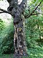 617683 A 683 Krakow Krzesławice Wankowicza 25 park w zespole dworsko parkowym 41.JPG