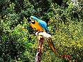 A@a paphos animal ^ bird park Agios Georgios paphos cy - panoramio (19).jpg