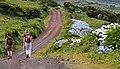 Açores 2010-07-19 (5055065328).jpg