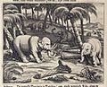 AMH-7002-KB Elephants pulling down palm trees.jpg