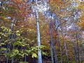 AUT 2862 ForestWander.JPG