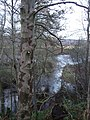 A backwater of the River Dee - geograph.org.uk - 632434.jpg