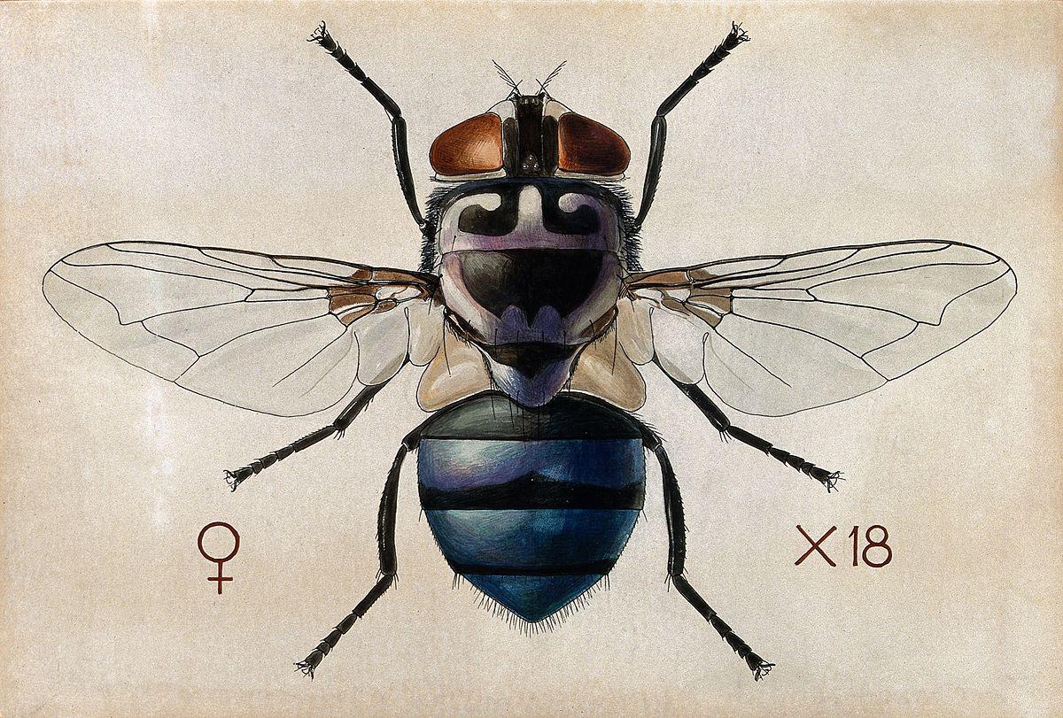1200 x 811 jpeg 650kBMosquito
