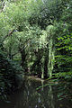 A dammed pond on Pincey Brook, Gibberd Garden Essex England 02.JPG