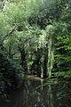 A dammed pond on Pincey Brook, Gibberd Garden Essex England 02.JPG