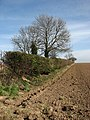 A field boundary hedge - geograph.org.uk - 715267.jpg