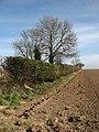 A field boundary hedge - geograph.org.uk - 715267.jpg