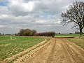 A hedgerow field-boundary east of Loddon Ingloss - geograph.org.uk - 1767834.jpg