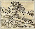 A horrible river-horse with giant teeth from India, Cosmographia (1544) by Sebastian Münster.jpg