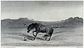 A horse is startled by a snake rearing in the grass. Steel e Wellcome V0020835.jpg