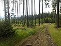 Abertamy, Czech Republic - panoramio.jpg