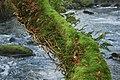 Afon Dwyfor - geograph.org.uk - 683866.jpg
