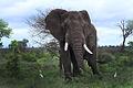 Africa Safari 016 (5299301454).jpg