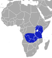 African Black Shrew area.png
