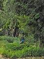 Agriculteur dans son champ.jpg