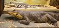 Alligatorn Smilet och en nilkrokodil på Göteborgs Naturhistoriska Museum 7948.jpg