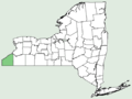 Allium tricoccum var burdickii NY-dist-map.png