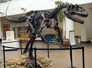 <i>Allosaurus</i> Genus of large theropod dinosaur