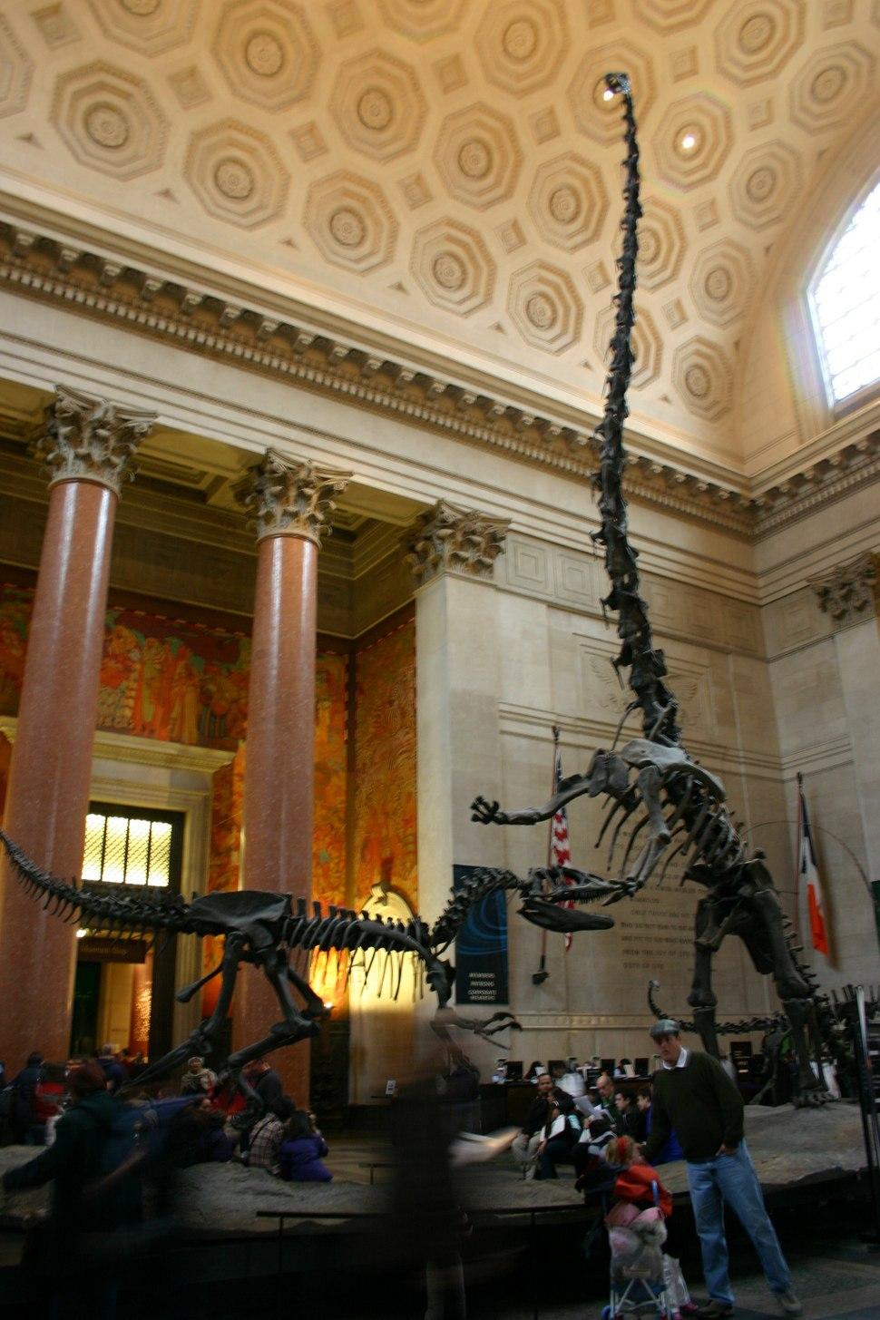 Allosaurus and Barosaurus