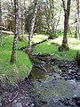 Allt Chearc from footpath bridge, Glen Liath - geograph.org.uk - 824246.jpg