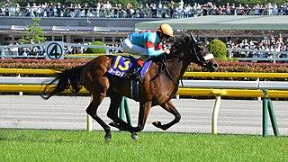 Almond Eye Japanese-bred Thoroughbred racehorse