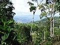 Along the Red Trail - Finca Esperanza Verde - Near Matagalpa - Nicaragua - 05 (31541097602).jpg