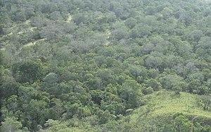 Wild law - Amazon Rainforest in Brazil.