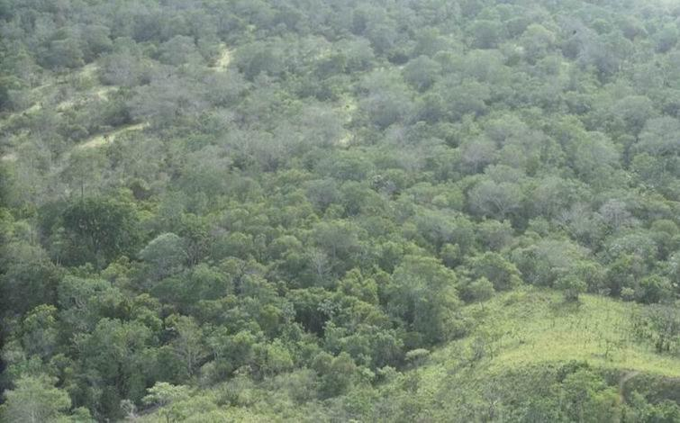 Amazon Rainforest-bird site