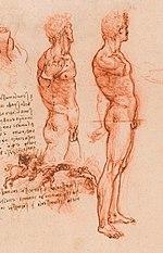 Étude anatomique de Léonard de Vinci (1504)