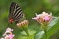 Andaman55 Un ID Silverline (7999672661).jpg
