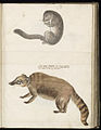 Animal drawings collected by Felix Platter, p2 - (117).jpg