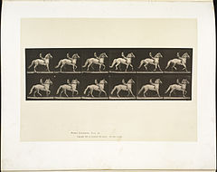 Animal locomotion. Plate 590 (Boston Public Library).jpg
