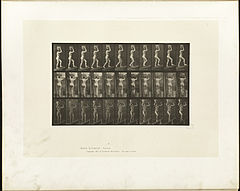 Animal locomotion. Plate 80 (Boston Public Library).jpg
