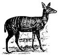 Antelope 1.png