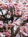 Apamates como en primavera.JPG
