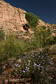 Aravaipa Canyon Wilderness (9415057384).jpg