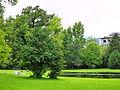 Arboretum - 'Land unter' nach Gewittersturm 2012-07-03 18-35-14 (P7000).JPG