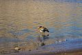 Argentina - Frey climbing 75 - lake birds (6962208269).jpg