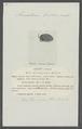 Armadillidium zenckeri - - Print - Iconographia Zoologica - Special Collections University of Amsterdam - UBAINV0274 098 09 0022.tif