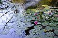 Art Ladislav Kopůnec Univerzon 0561019 Natura Photo original Nature Artworks.jpg