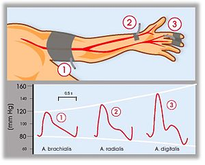 Continuous noninvasive arterial pressure - Blood pressure changes along the arterial pathway