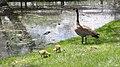 Assiniboine Park Zoo, Winnipeg (480463a) (14640000382).jpg