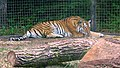 Assiniboine Park Zoo, Winnipeg (480540) (24477010614).jpg