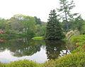 Asticou Azalea Garden 2006 2.jpg