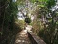 Atalho Jardim Botânico Out 2011. - panoramio.jpg