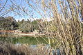 Athalassa lake spring Nicosia Republic of Cyprus.JPG
