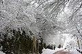 Aufstieg zur Wartburg bei Eisenach . Der nächste Winter kommt bestimmt ^ - panoramio.jpg