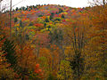 Autumn-colors-mountains - West Virginia - ForestWander.jpg