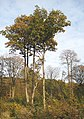 Autumn in Great Bull Wood - geograph.org.uk - 608836.jpg